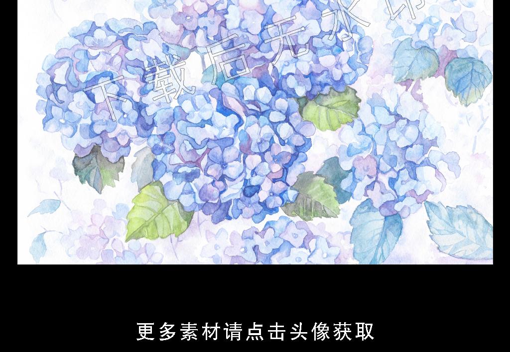 高清简约小清新热带雨林植物叶子横幅装饰画