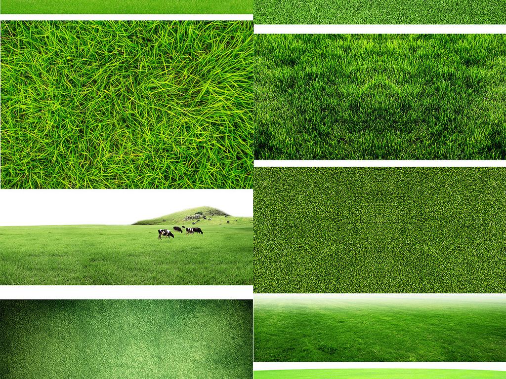 绿树绿草夏天绿色草地春天草坪绿色草坪绿色草地图片素材绿色清新绿色