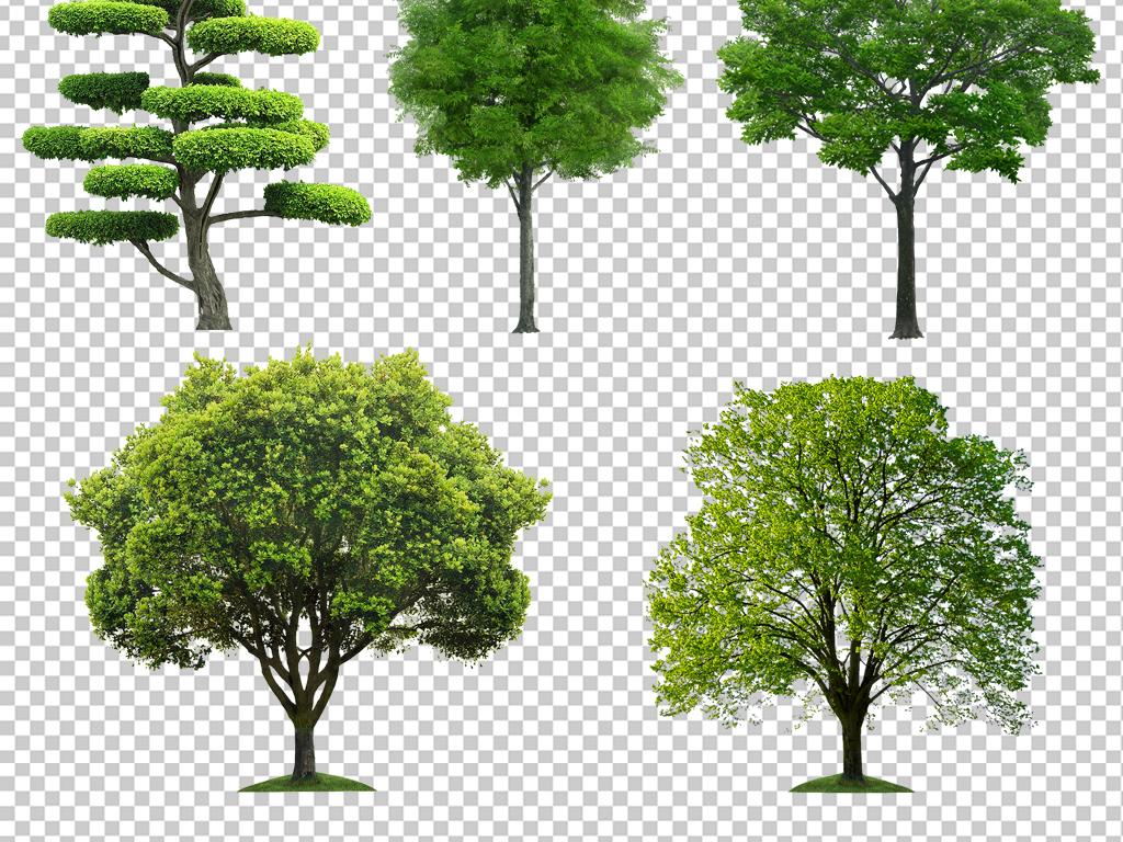 树木植物花卉园林免抠花卉素材景观植物素材许愿树卡通树手绘树香蕉树