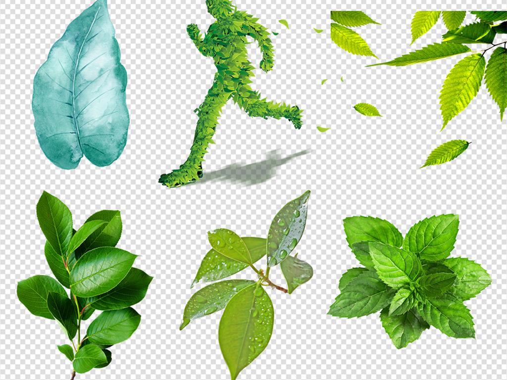 绿树飘叶浅绿色薄荷叶子圆形花环茶叶春季树叶