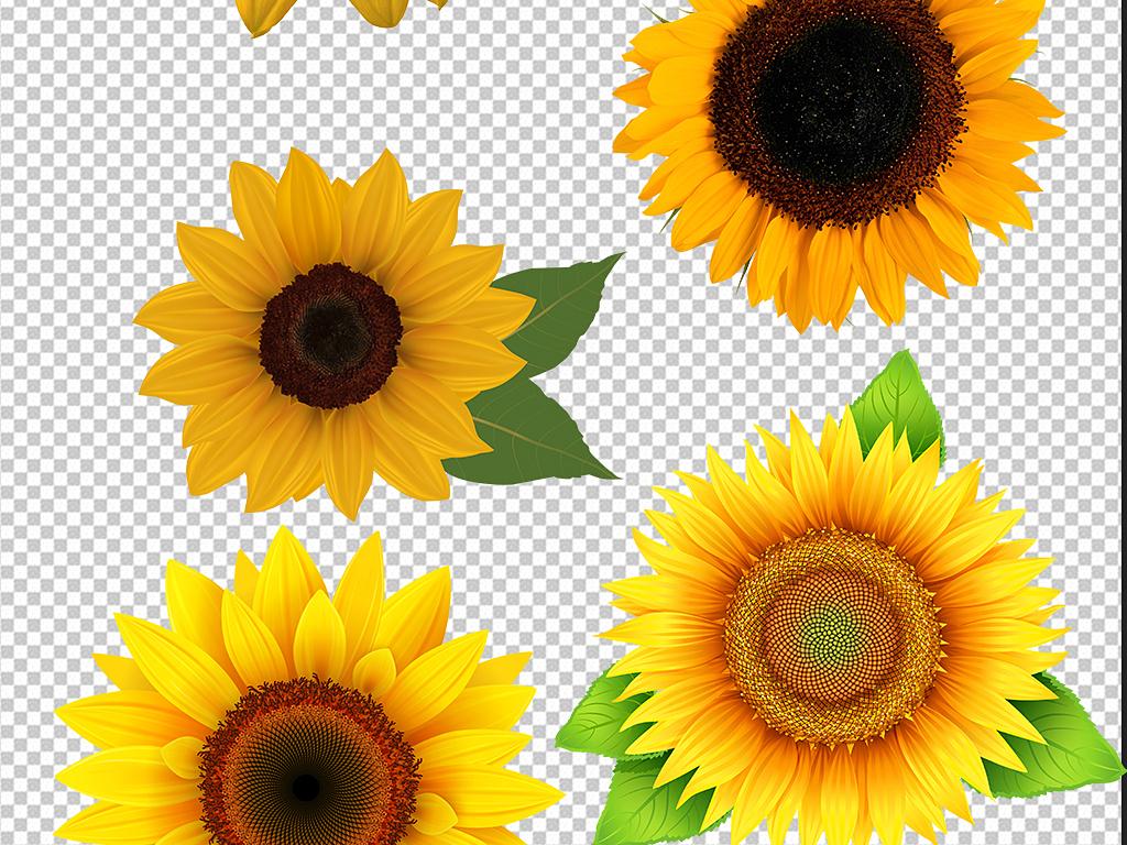 向日葵太阳花盆栽png素材