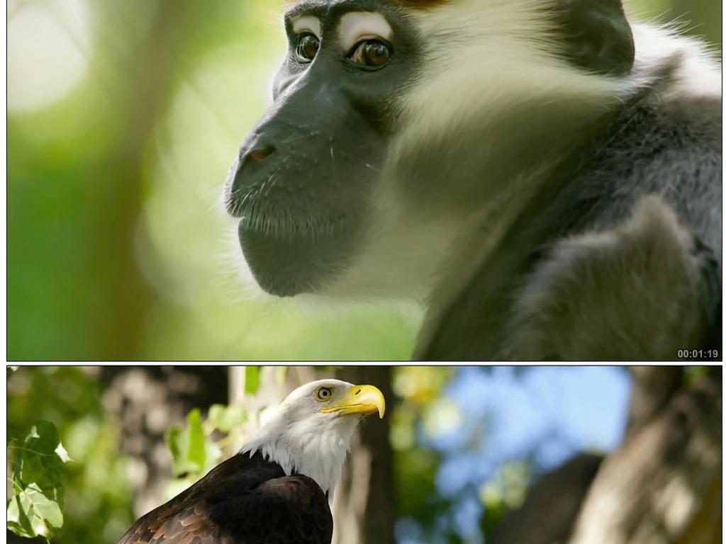 超清实拍动物世界绚丽多彩视频素材(图片编号:)_自然