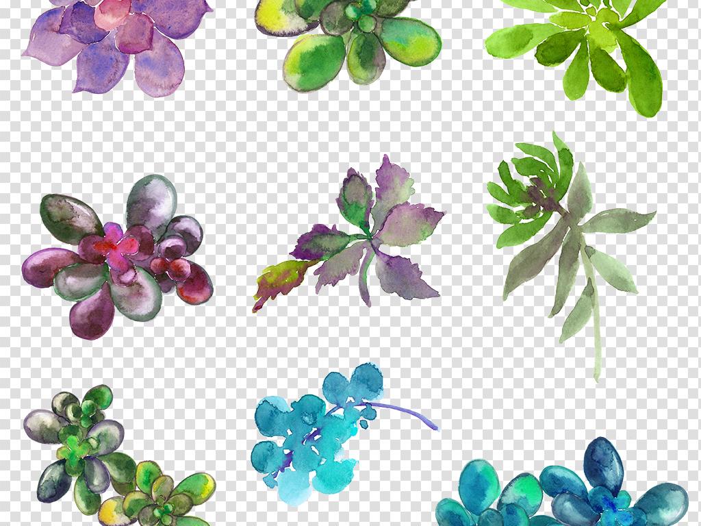 手绘素材森系素材花卉素材花卉边框素材仙人掌