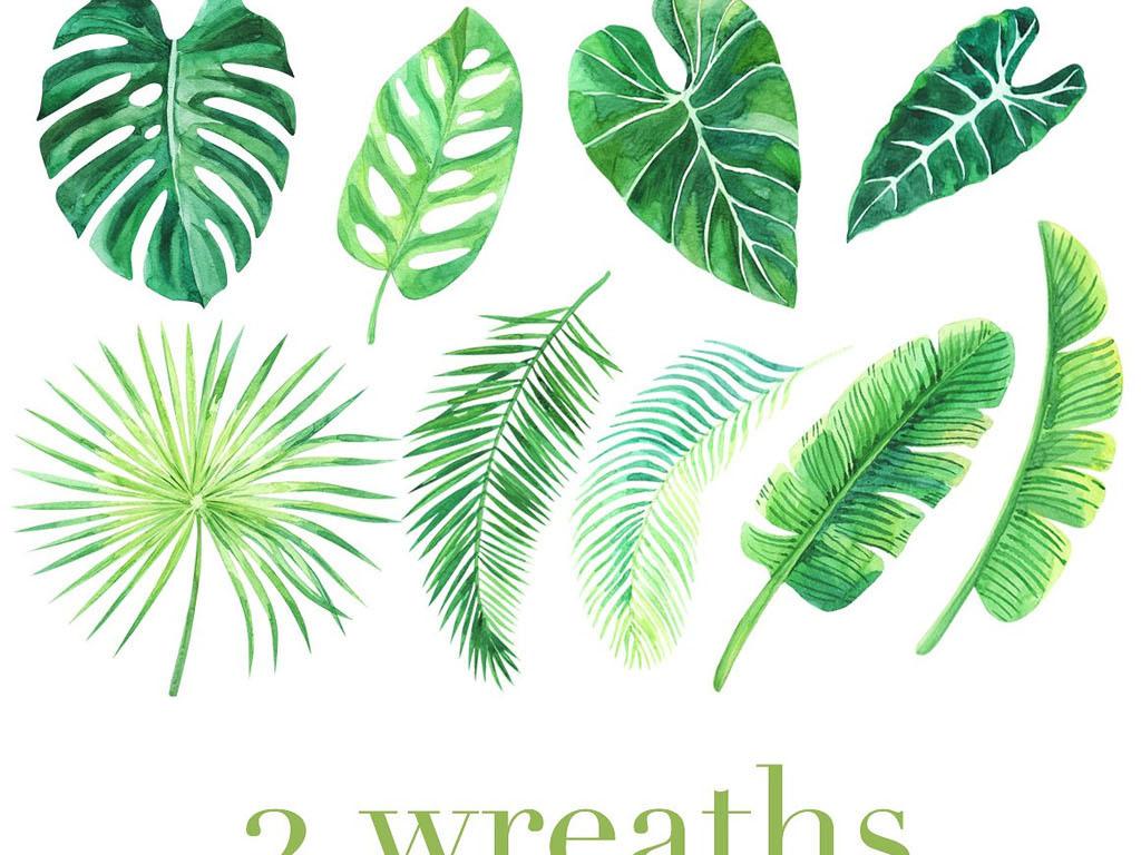 清新手绘热带雨林绿树叶png免扣设计元素