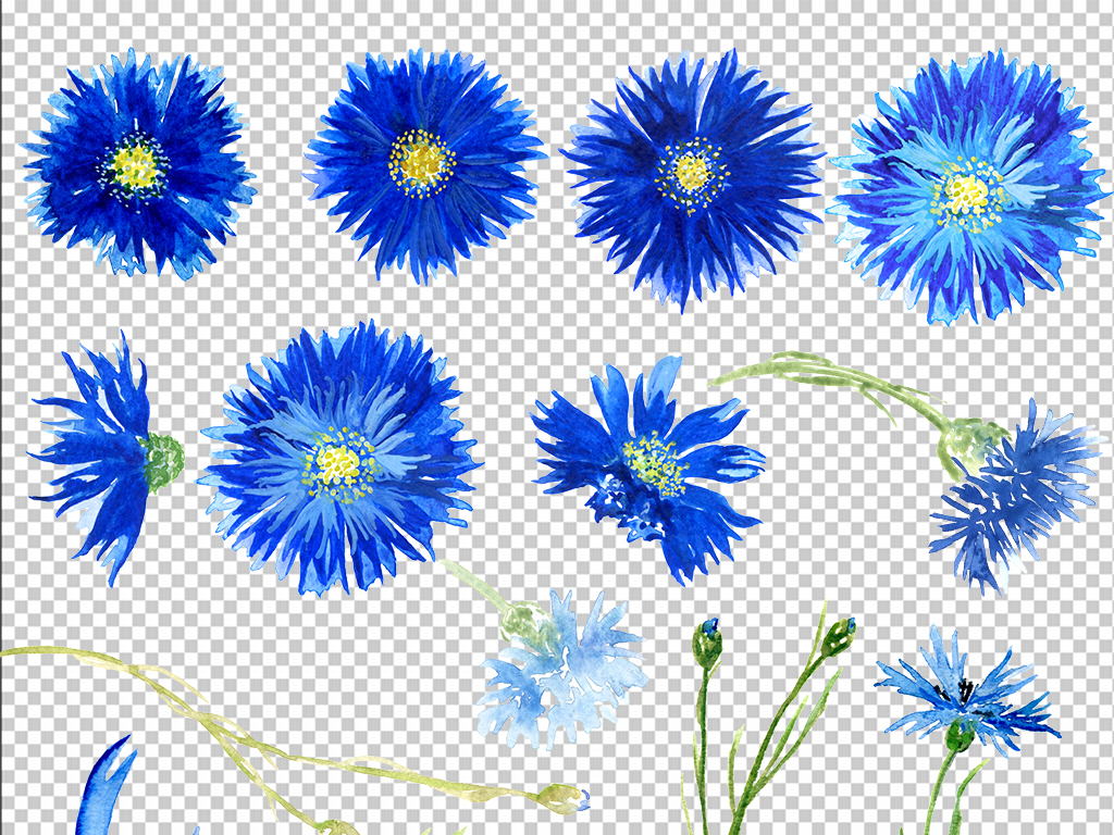 手绘花朵装饰玫瑰花瓣玫瑰蓝色妖蓝色背景蓝色玫瑰背景花朵素材花朵背