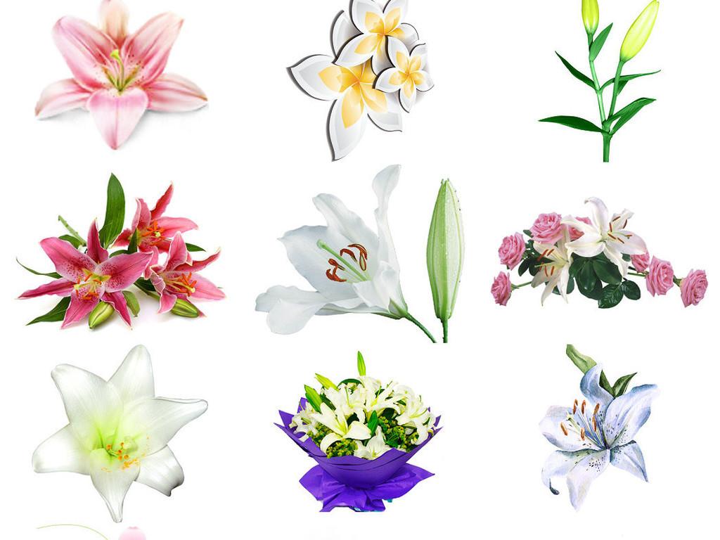 观光植物百合花免抠png素材1