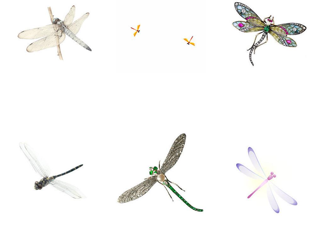 可爱卡通蜻蜓昆虫类动物png免抠素材1