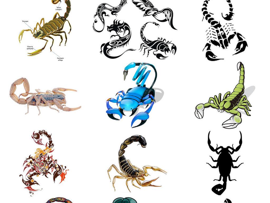 动物蝎子免抠png图片素材2