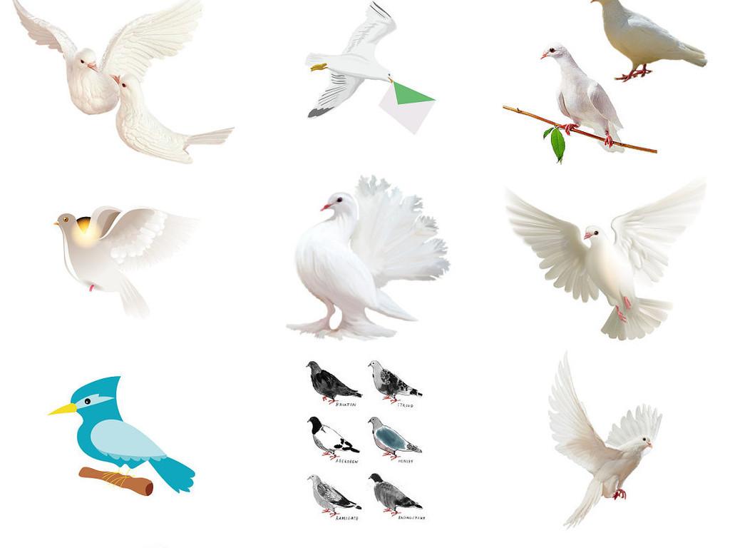 飞行类动物png素材鸽子免抠png素材2