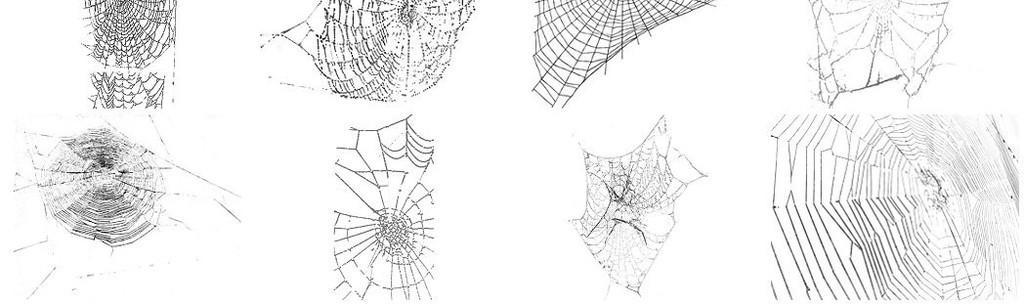 黑白蜘蛛网蜘蛛png图片
