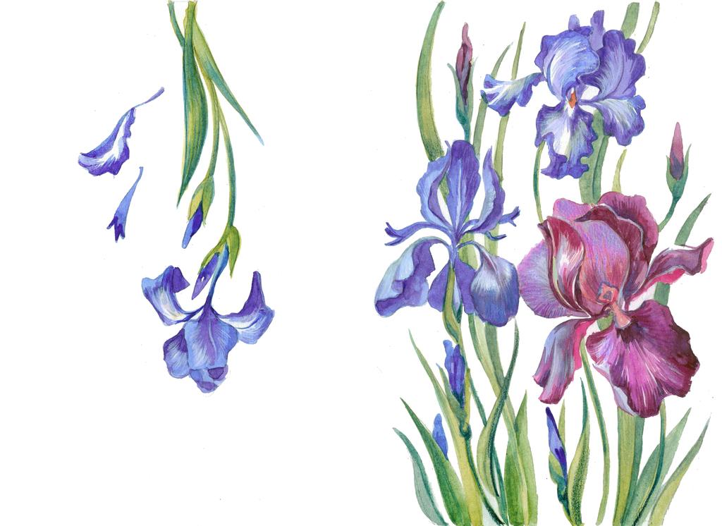 手绘水彩植物花卉