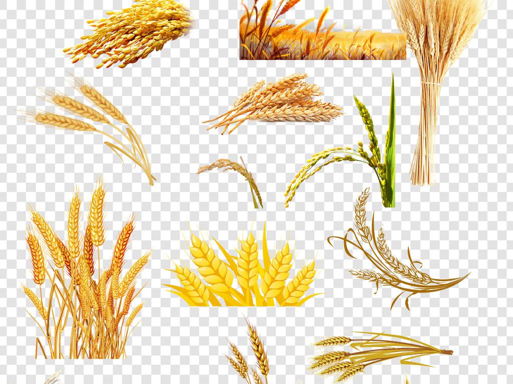 矢量手绘割麦子割稻子农业绿色食品健康食品农民种地食品海报麦穗稻穗