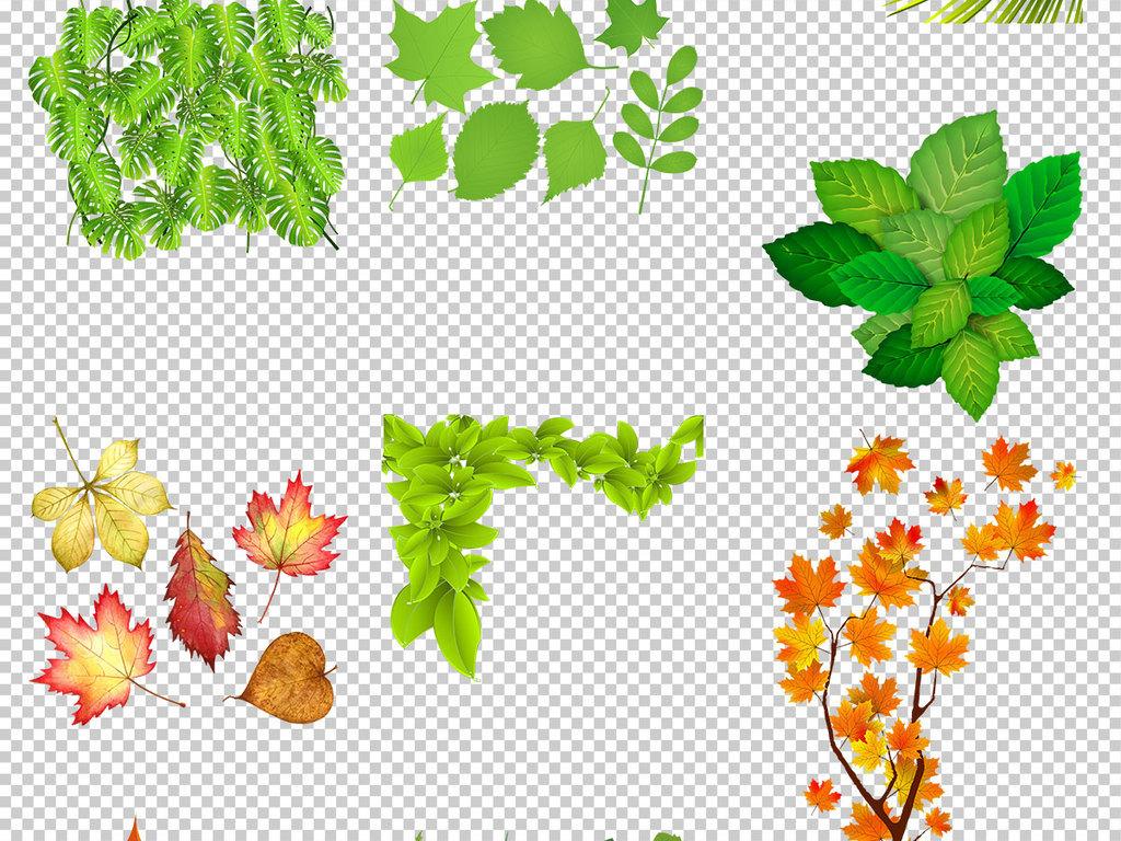 设计元素 自然素材 树叶 > 手绘各种叶子插图免抠png透明图层素材