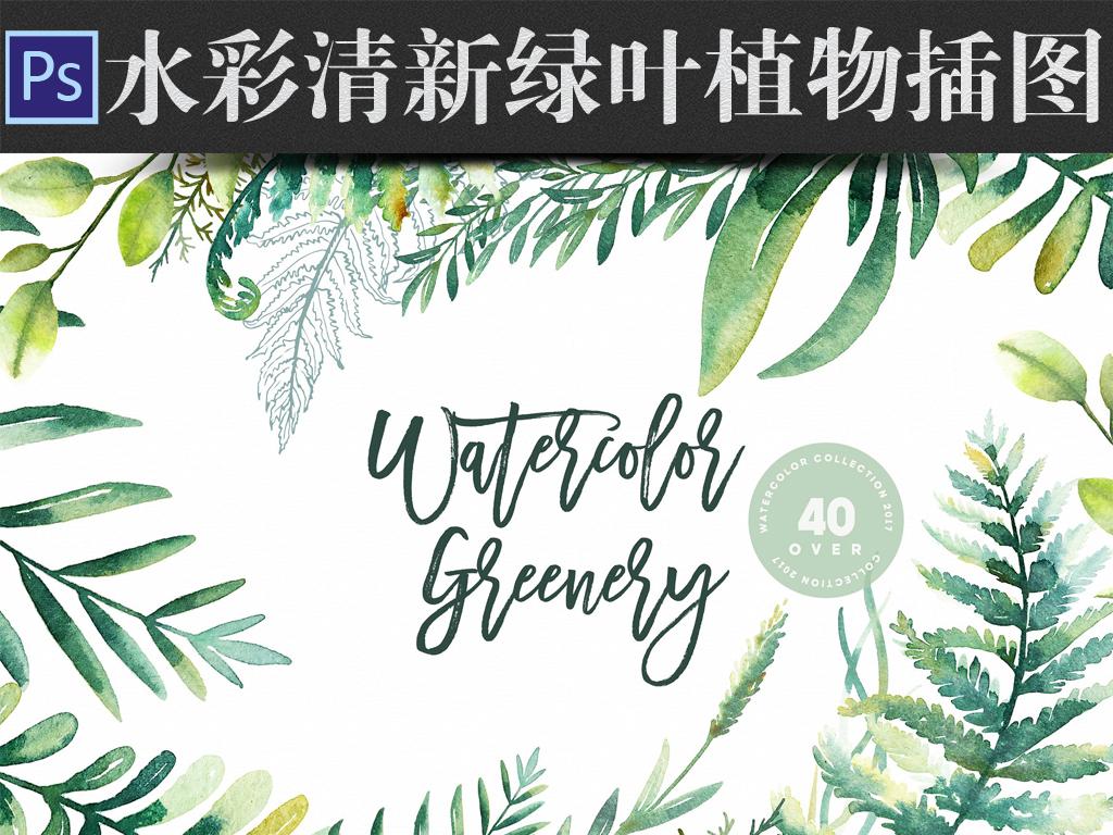 水彩画清新绿叶植物插图海报请柬设计素材
