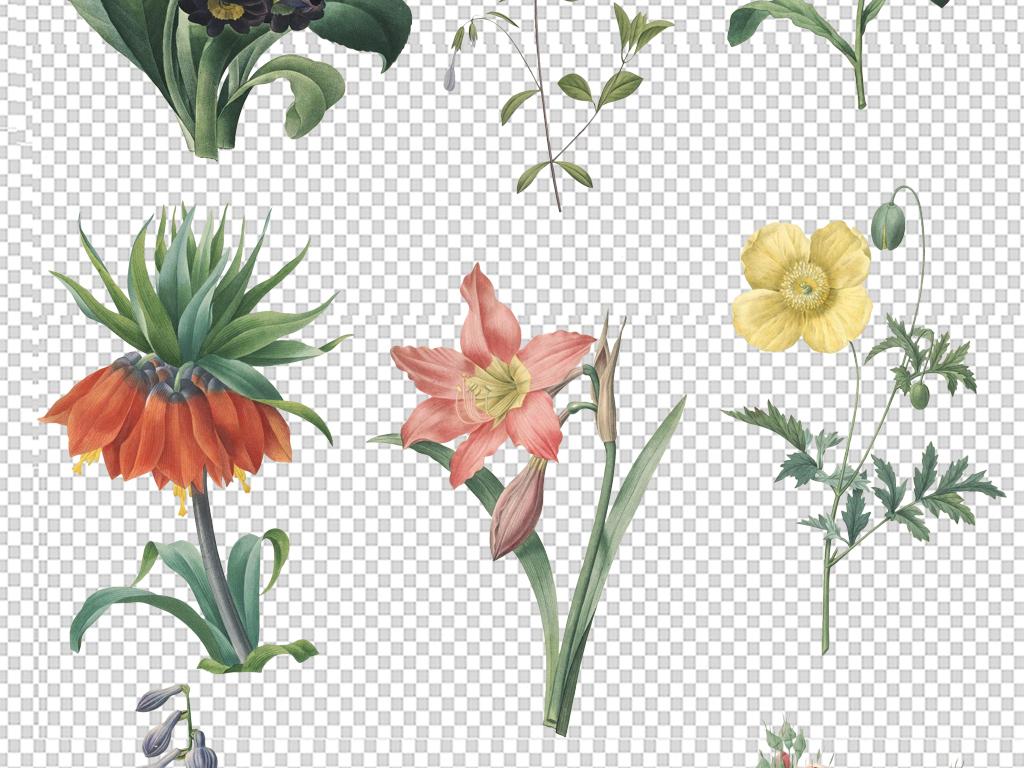 唯美复古手绘植物花卉玫瑰花朵png免素材
