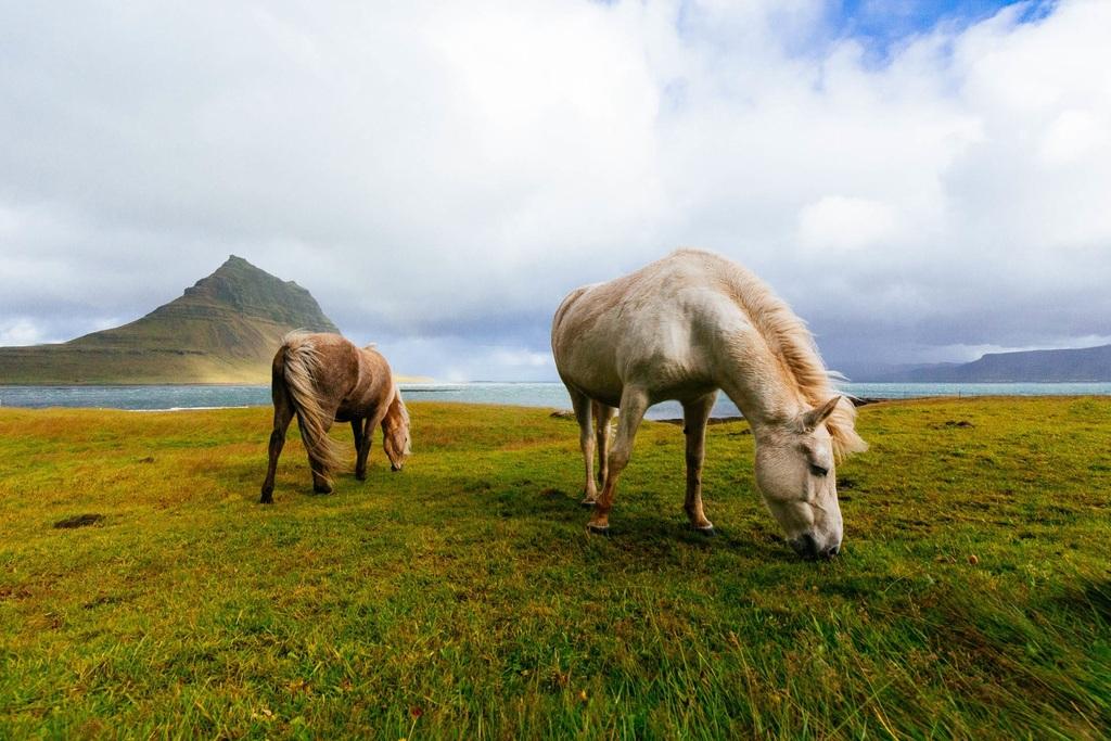 设计作品简介: 唯美风景草原骏马摄影图片 位图, rgb格式高清大图