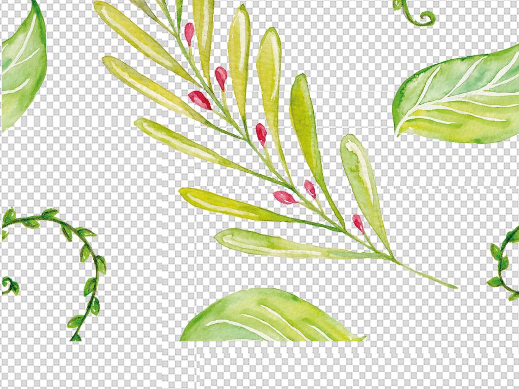 藤树藤边框枯树藤藤条草藤树藤叶子手绘叶子绿藤树藤绿叶树枝绿叶水珠