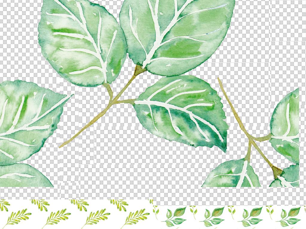 手绘叶子绿藤树藤绿叶树枝绿叶水珠绿叶图片绿叶水滴绿叶的图片一片