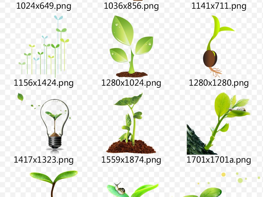 png)                                  发芽素材小树成长小树生长发