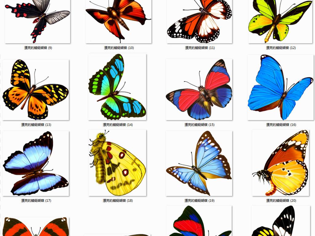 蜻蜓图片简笔画带颜色