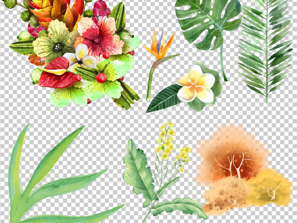 手绘水彩植物草花卉