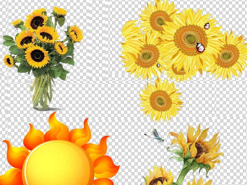 卡通手绘向日葵太阳花背景素材
