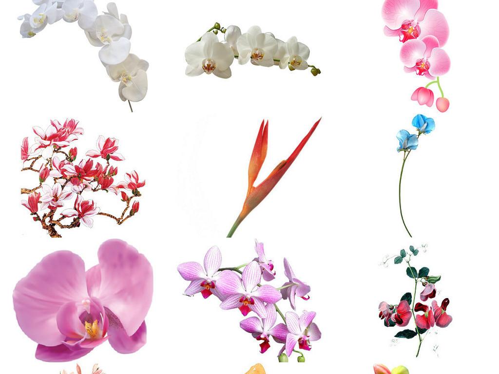 观花植物兰花免抠png透明底素材3
