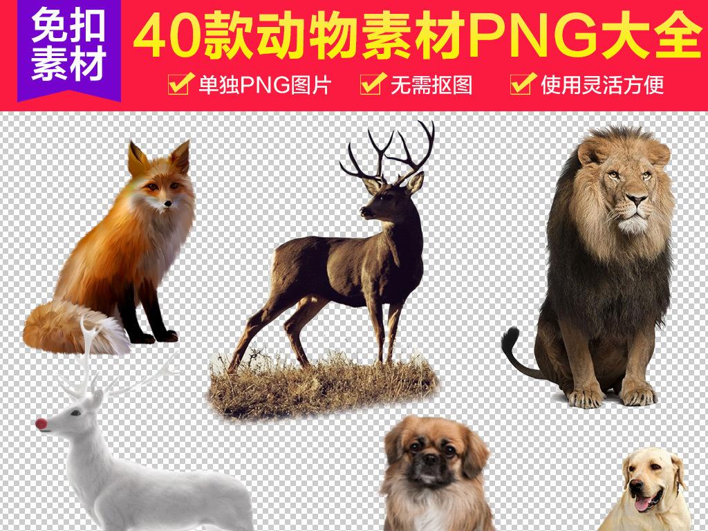 40款野生动物大全png素材下载