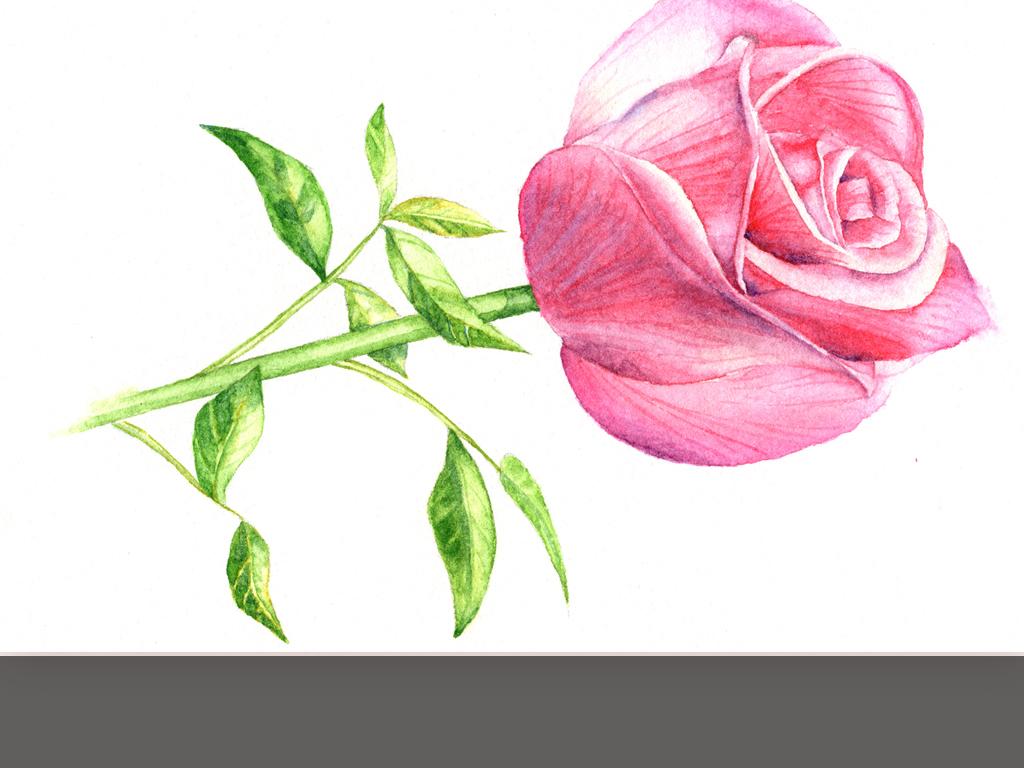 手绘粉色玫瑰花装饰画