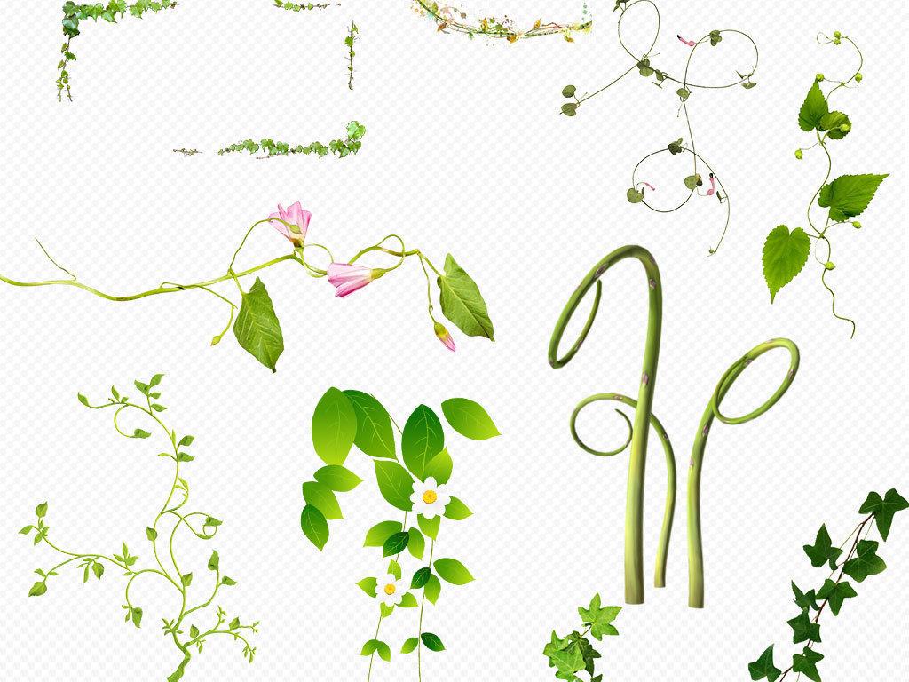绿色青藤藤蔓树藤树叶png素材下载