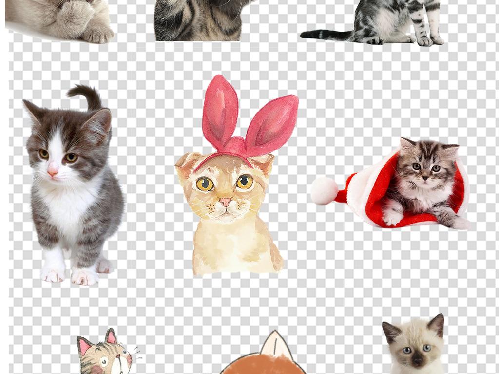 宠物猫幼儿园                                  儿童画手绘