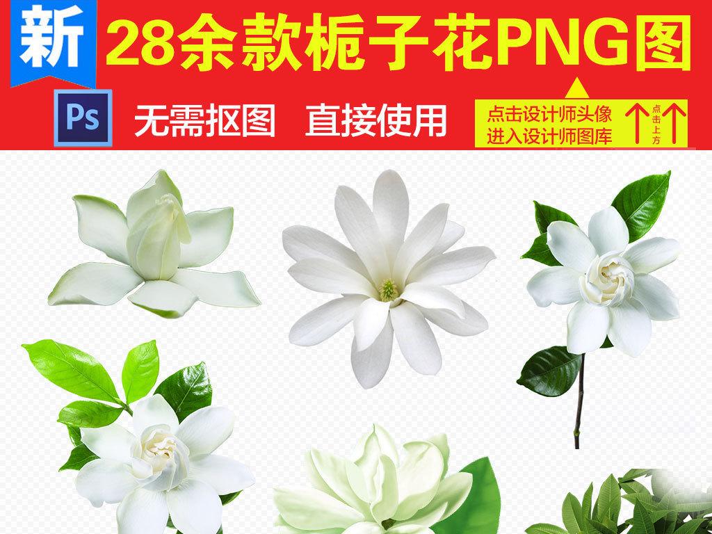 png)                                  卡通花朵手绘栀子花