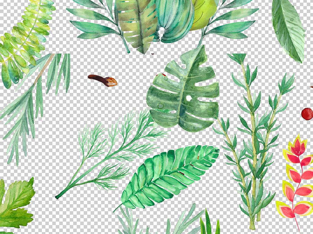 小清新手绘水彩树叶植物花草热带叶子素材