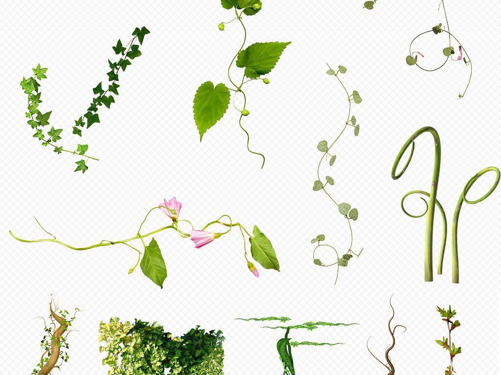 蔓藤枝条花卉花朵花卉背景手绘花卉线描花卉水彩花卉白描花卉花卉油画