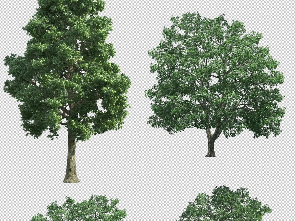 ps树png植物图片效果图设计