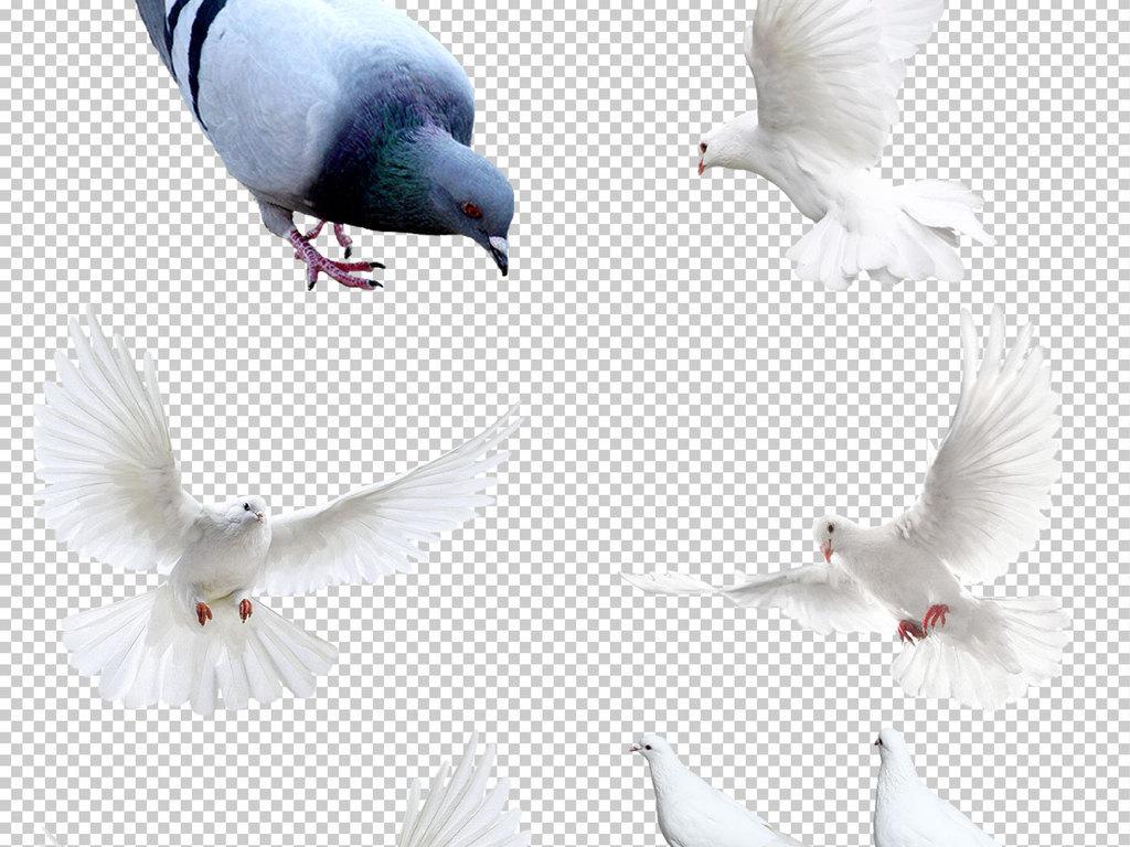 我图网提供精品流行各种鸽子图片免抠png透明图层素材下载,作品模板源文件可以编辑替换,设计作品简介: 各种鸽子图片免抠png透明图层素材 位图, RGB格式高清大图,使用软件为 Photoshop CC(.psd)