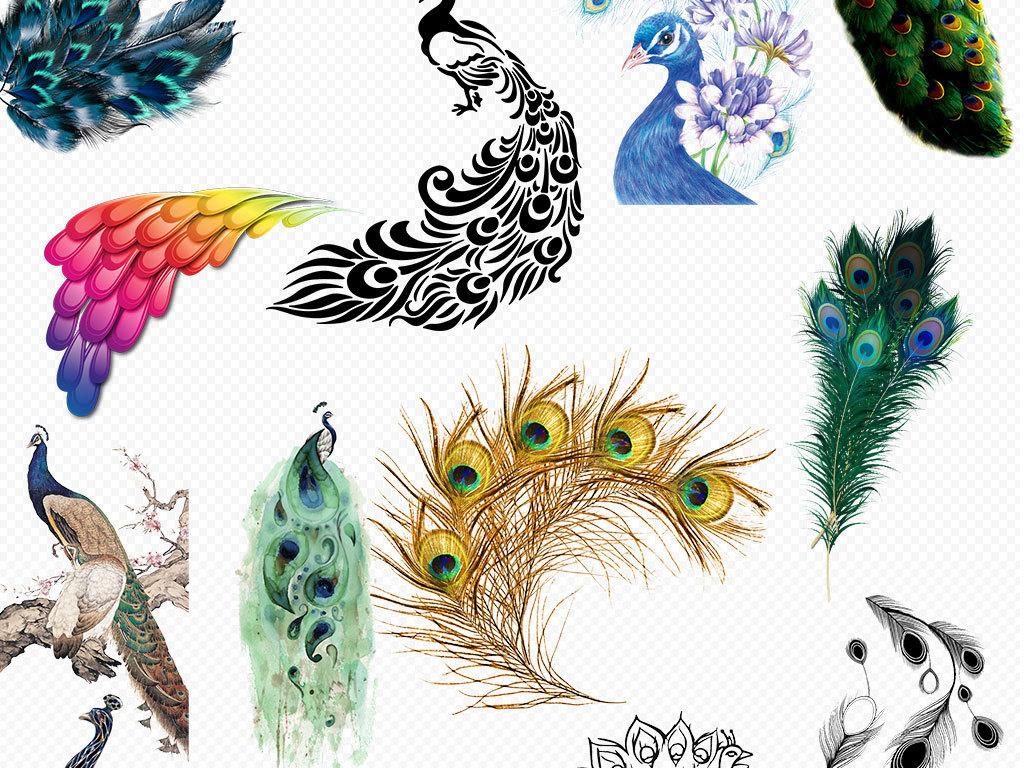 动物园手绘                                  水彩孔雀