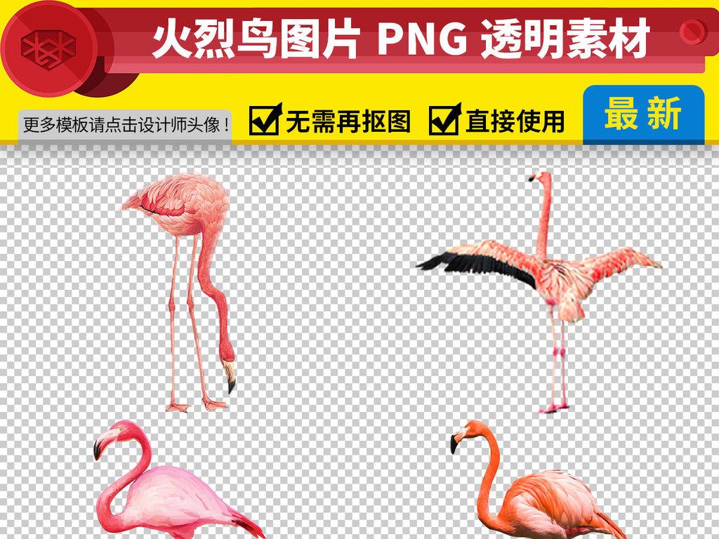 火烈鸟图片免抠png透明素材