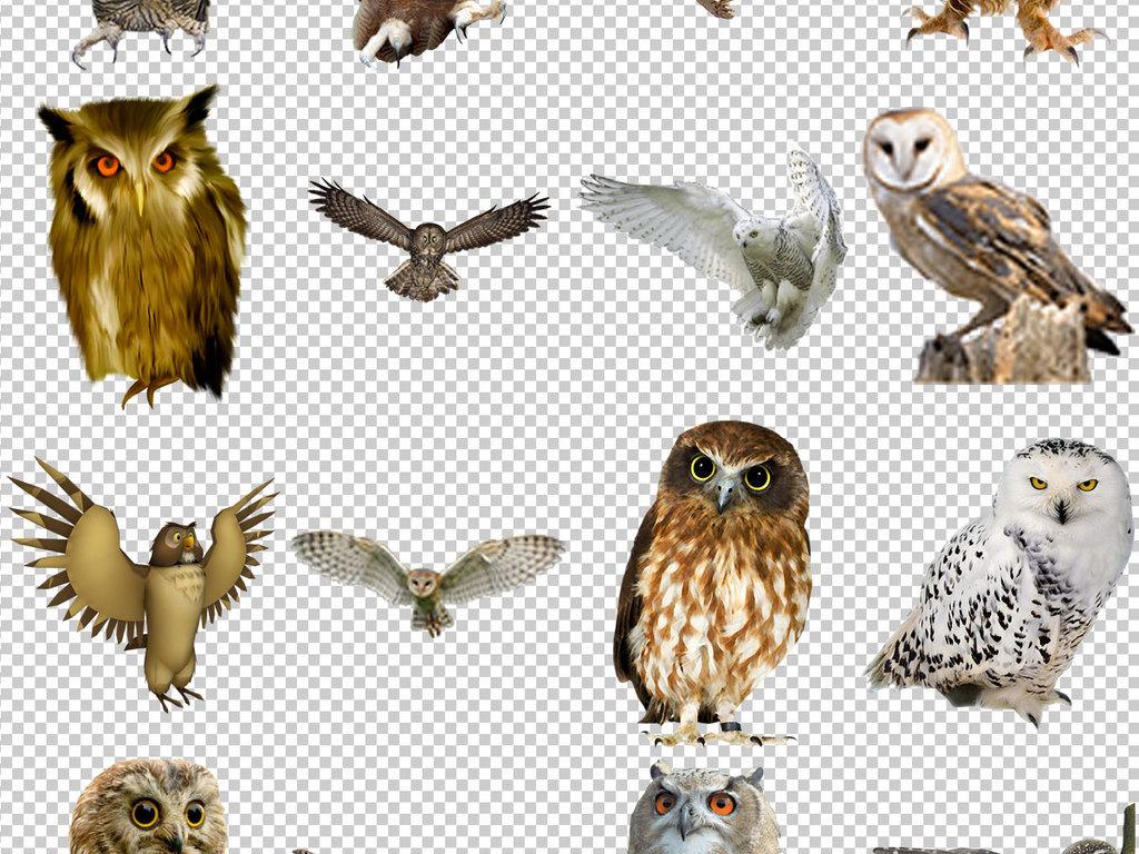 猫头鹰免抠png透明图层素材(图片编号:16779389)_动物