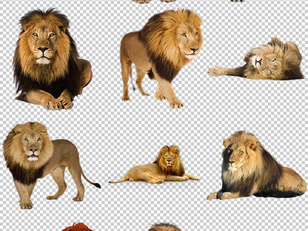 psd)霸气狮子正面头像狮子简笔画图片大全白狮子狮子logo上古狮子