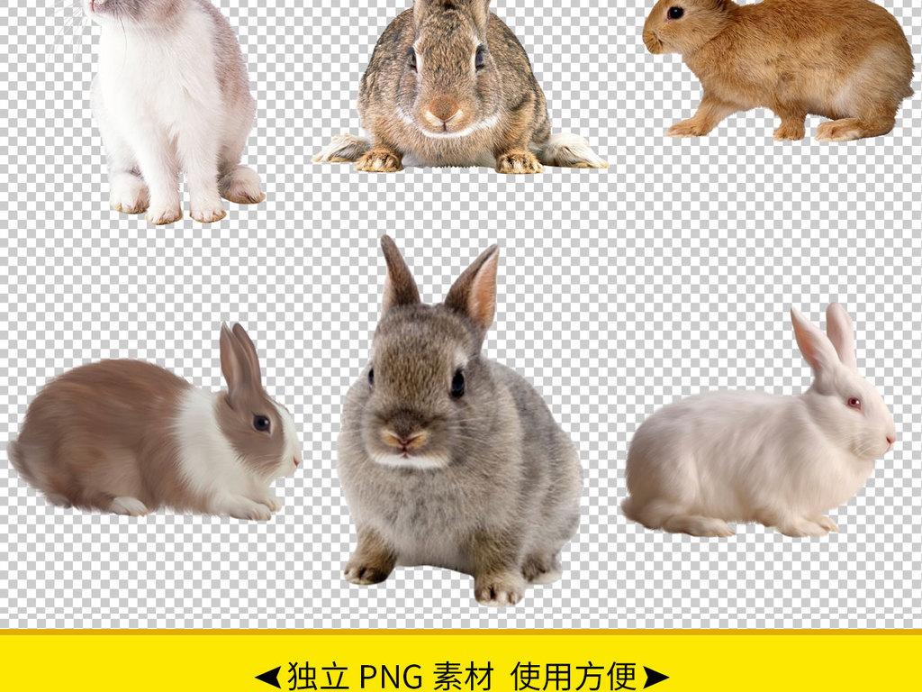 可爱呆萌兔子超萌可爱小