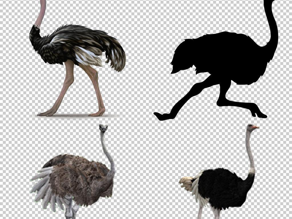 图片手绘鸵鸟素材鸵鸟淘宝素材鸵鸟png素材鸵鸟图片鸵鸟透明背景图
