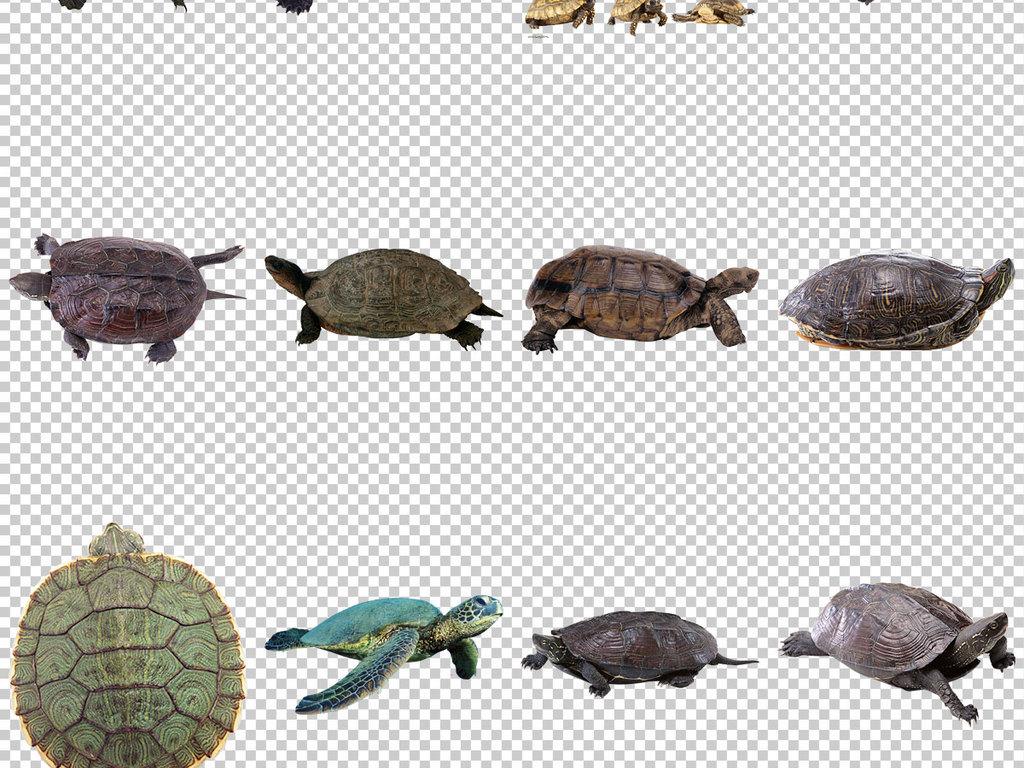 动漫小乌龟图片巴西红耳龟小乌龟