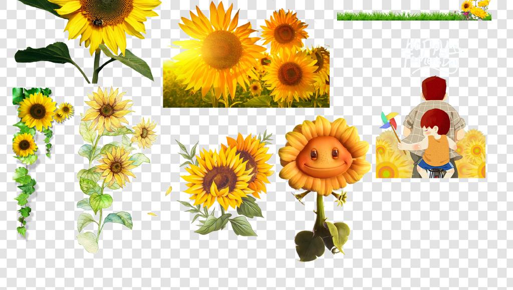 png)                                  手绘向日葵
