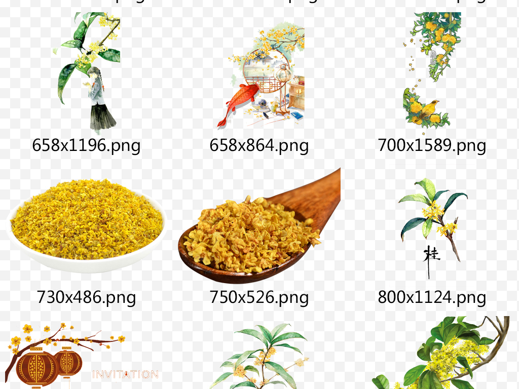手绘卡通桂花植物图片鲜花png素材