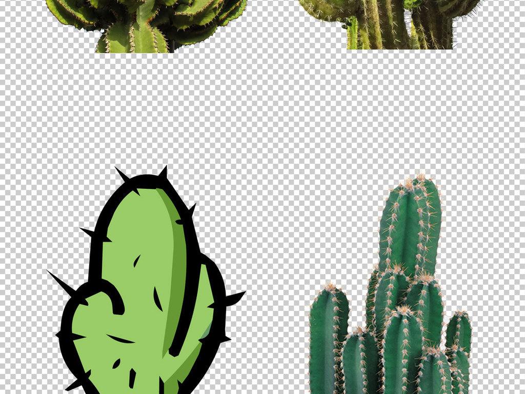 仙人掌图片免抠png透明图层素材图片