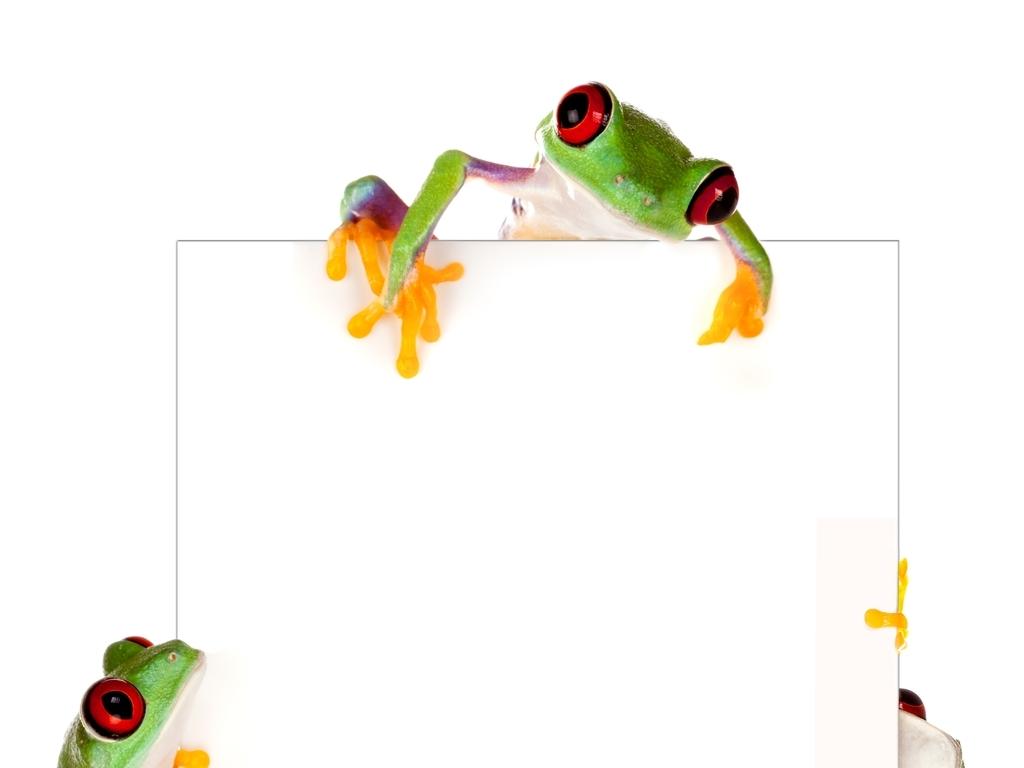 广告牌                                  野生动物图片