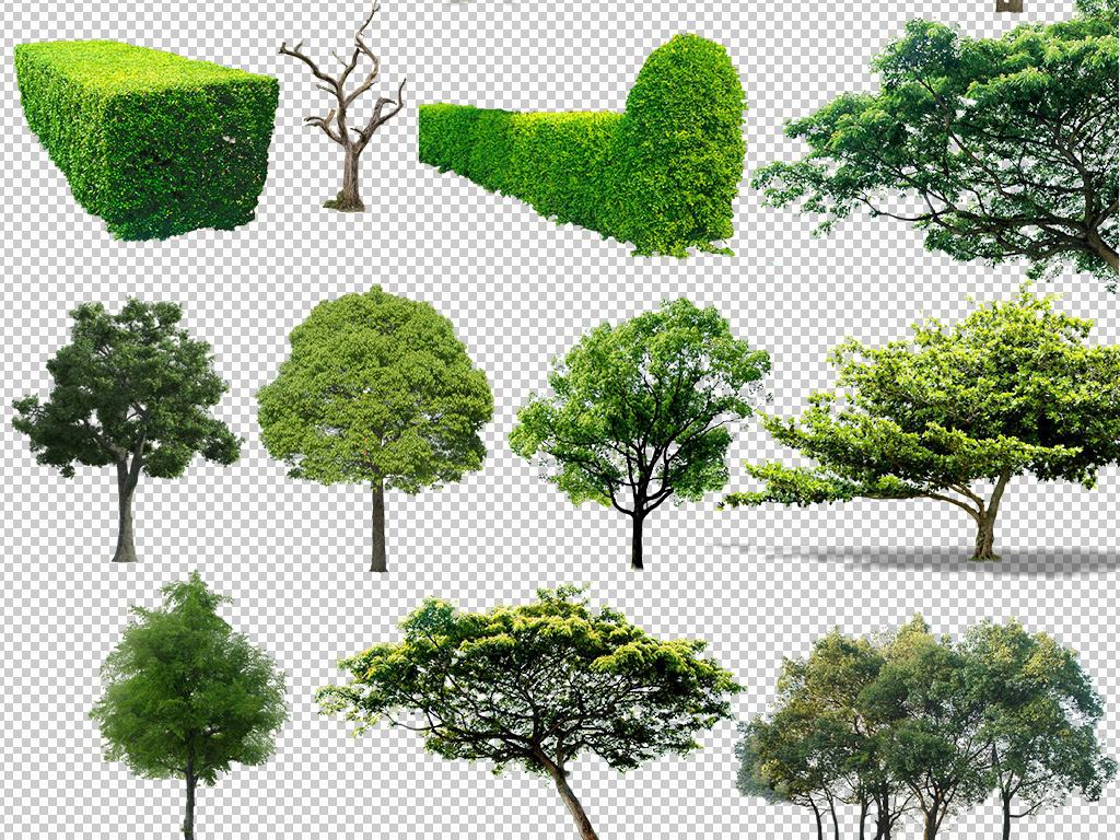 38余款绿色植物大树png素材合集