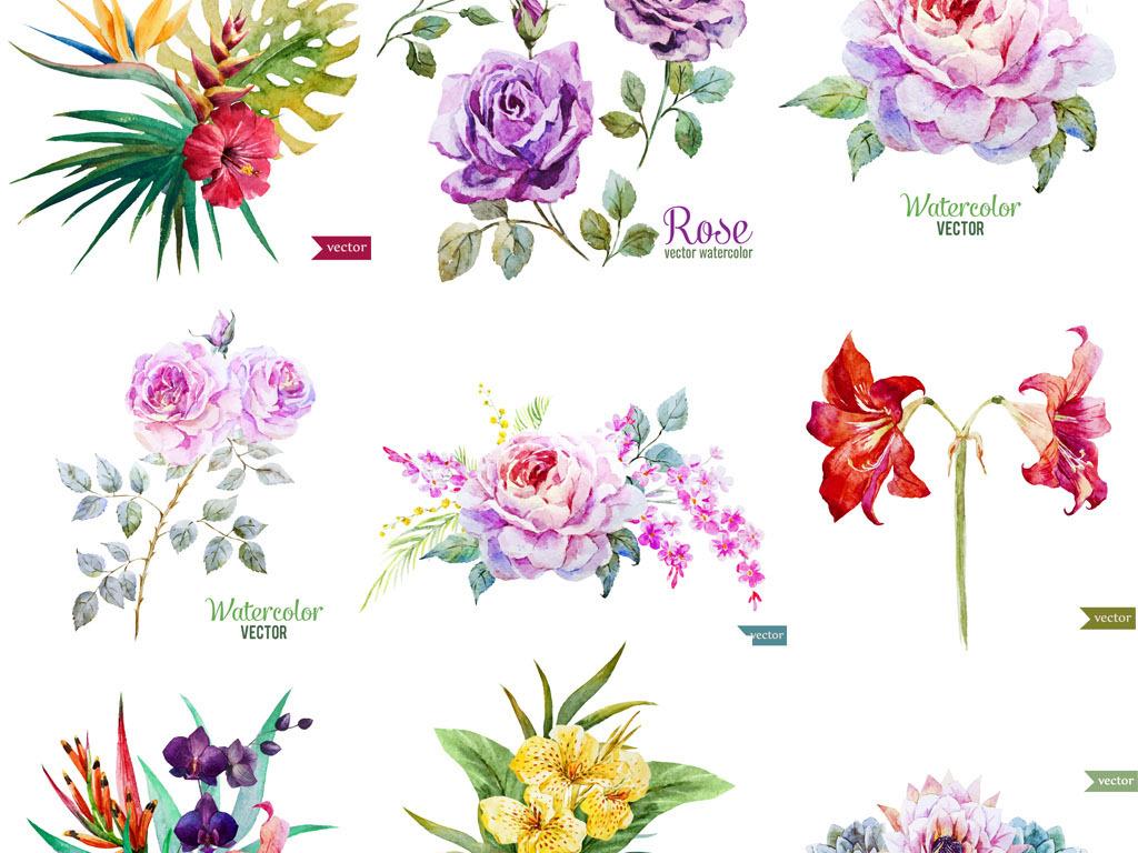 手绘水彩花卉素材