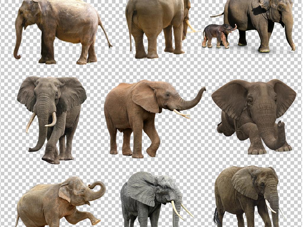 泰国旅游度假大象图片宣传海报素材(图片编号:)_动物